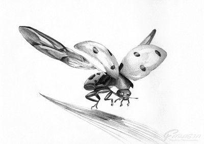 Biedronka z rozłożonymi skrzydłami