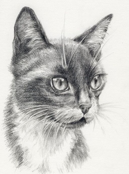 Czarno-biały kot wzór tatuażu