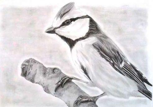 Czarno-biały ptak na gałęzi