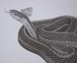 Czarny wąż i motyl wzór tatuażu