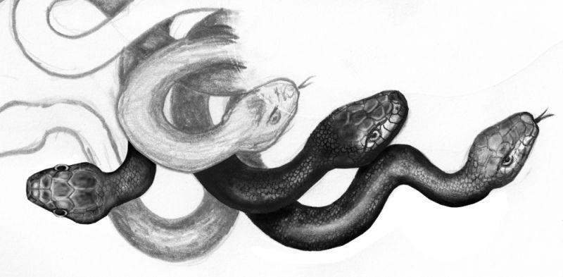 Cztery głowy węży tatuaż wzór