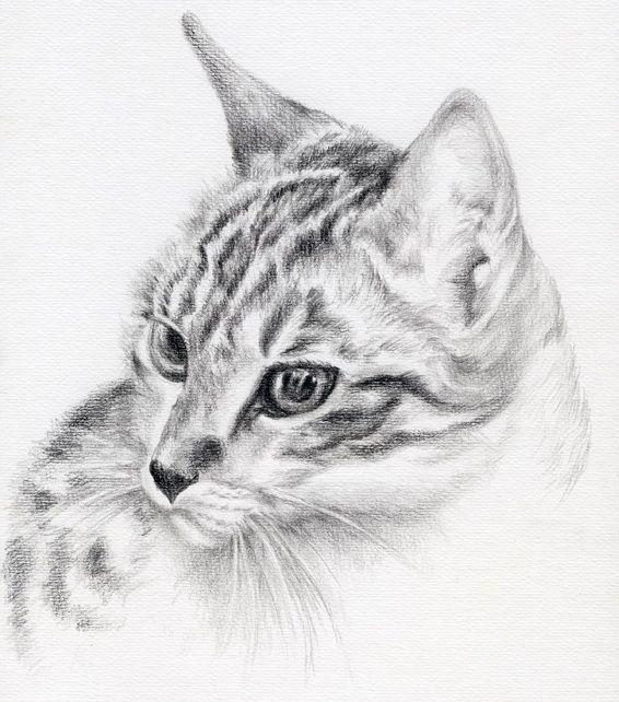 Kot Tatuaż Wzór