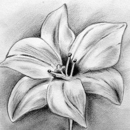 Kwiat lilii tatuaż wzór