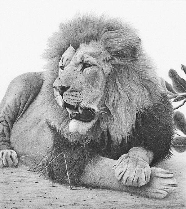 Leżący na ziemi lew wzór tatuażu