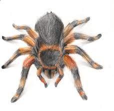 Owłosiony pająk wzór tatuażu