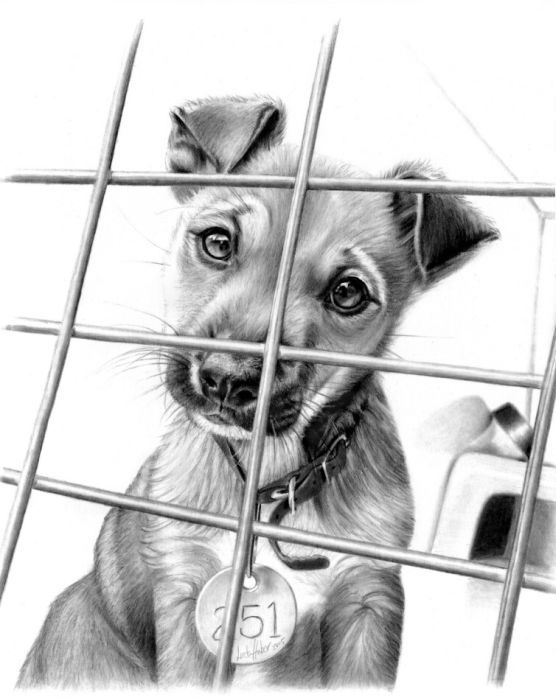 Pies za kratkami wzór tatuażu