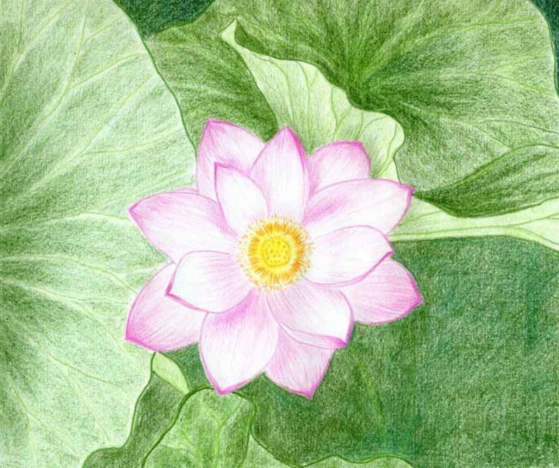 Różowy lotos na liściach wzór tatuażu