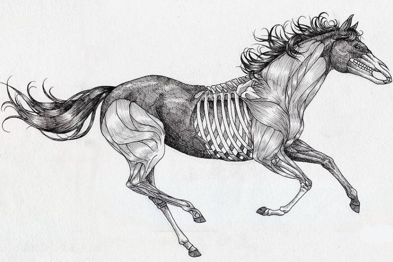 Tatuaż Wzór Koń Anatomia