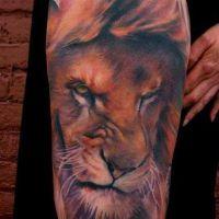 Głowa groźnego lwa tatuaż