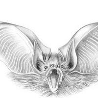 Atakujący nietoperz tatuaż wzór
