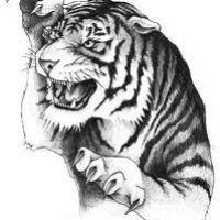 Atakujący tygrys wzór tatuażu