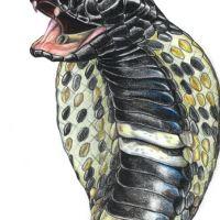 Czarna kobra tatuaż wzór