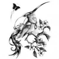 Czarny koliber wśród kwiatów wzór