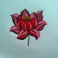 Czerwony kwiat lotosu