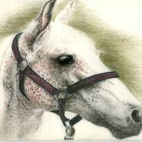 Głowa białego konia tatuaż wzór