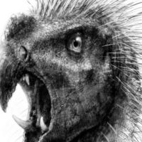 Głowa ptaka wzór tatuażu