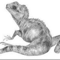 Jaszczurka rysowany wzór tatuażu