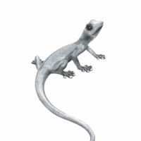 Jaszczurka z cienkim ogonem