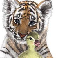 Mały tygrysek i kaczuszka