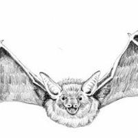 Nietoperz i jego skrzydła wzór tatuażu