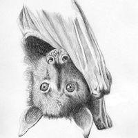 Nietoperz wiszący głowa w dół tatuaż wzór