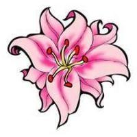 Pojedyncza różowa lilia wzór