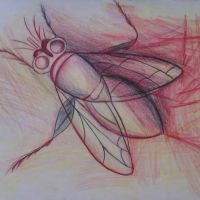 Rysowana mucha tatuaż