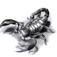 Skorpion wzór tatuażu