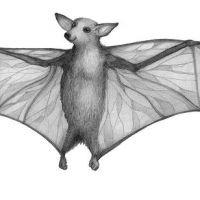 Szerokie skrzydła nietoperza tatuaż wzór