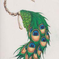 Szkielet pawia i pióra wzór