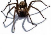 Trójwymiarowy pająk wzór