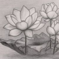 Trzy lotosy na wodzie wzór