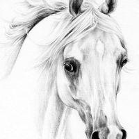 Wzór tatuaż biały koń głowa