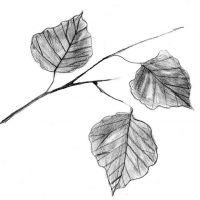 Wzór tatuażu liście