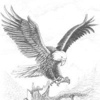 Wzór tatuażu z orłem