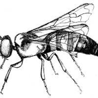 Wzór tatuażu z owadem
