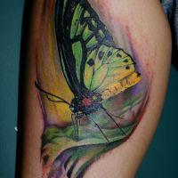 Zielono-żółty motyl tatuaż