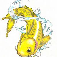Żółta ryba Koi wzór