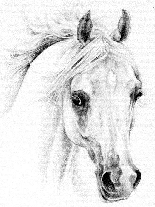 Tatuaże Konie