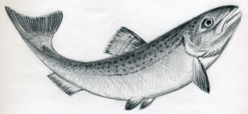 Wzór tatuażu ryba