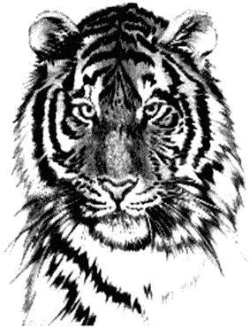 Tygrys twarz wzór tatuaż