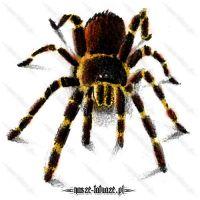 Brązowo-żółty pająk