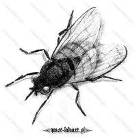 Ogromna czarna mucha