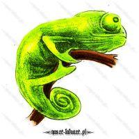 Seledynowa jaszczurka